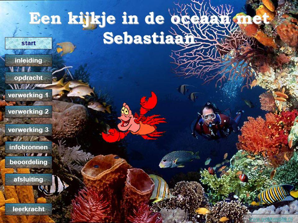 Een kijkje in de oceaan met Sebastiaan www.webkwestie.nl verwerking 2 verwerking 1 opdracht inleiding start verwerking 3 infobronnen beoordeling afsluiting leerkracht