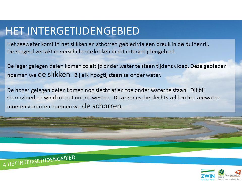 HET INTERGETIJDENGEBIED Het zeewater komt in het slikken en schorren gebied via een breuk in de duinenrij. De zeegeul vertakt in verschillende kreken