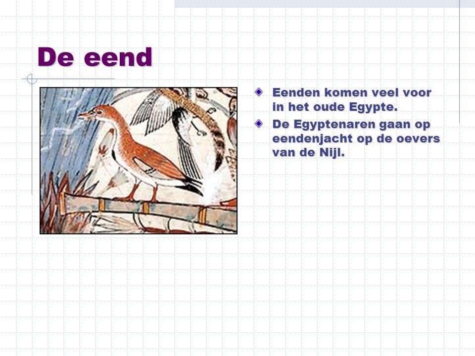 De eend Eenden komen veel voor in het oude Egypte. De Egyptenaren gaan op eendenjacht op de oevers van de Nijl.