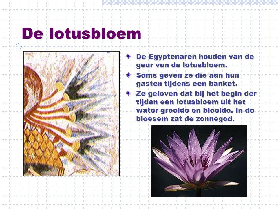De lotusbloem De Egyptenaren houden van de geur van de lotusbloem. Soms geven ze die aan hun gasten tijdens een banket. Ze geloven dat bij het begin d