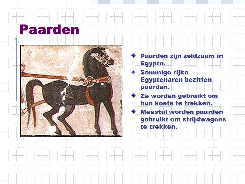 Paarden Paarden zijn zeldzaam in Egypte. Sommige rijke Egyptenaren bezitten paarden. Ze worden gebruikt om hun koets te trekken. Meestal worden paarde