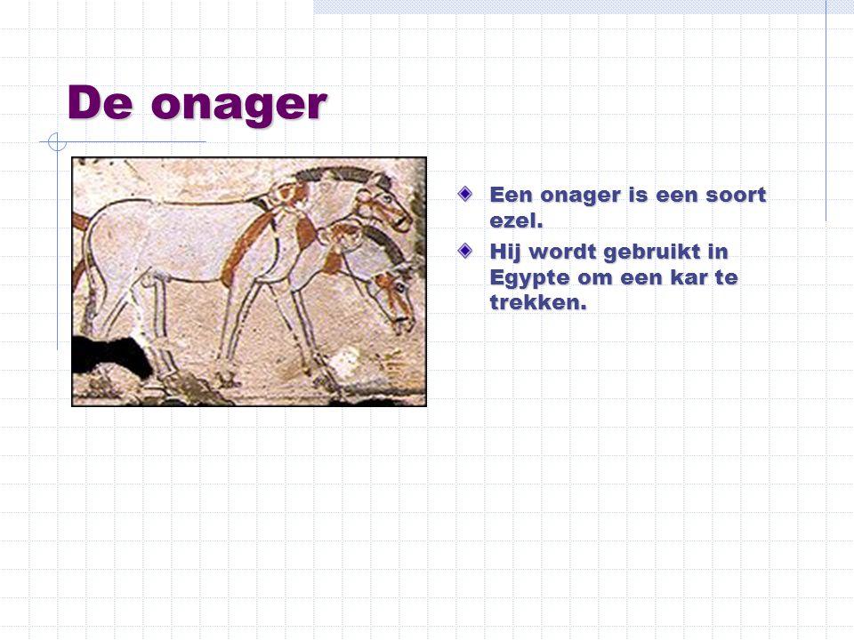 De onager Een onager is een soort ezel. Hij wordt gebruikt in Egypte om een kar te trekken.