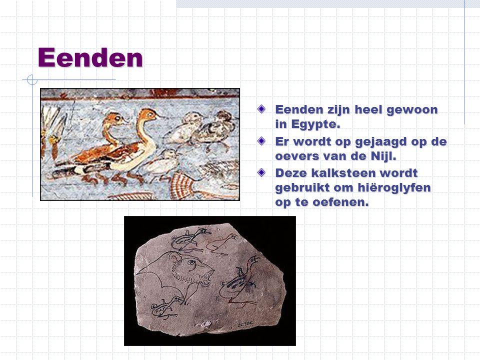 Eenden Eenden zijn heel gewoon in Egypte. Er wordt op gejaagd op de oevers van de Nijl. Deze kalksteen wordt gebruikt om hiëroglyfen op te oefenen.