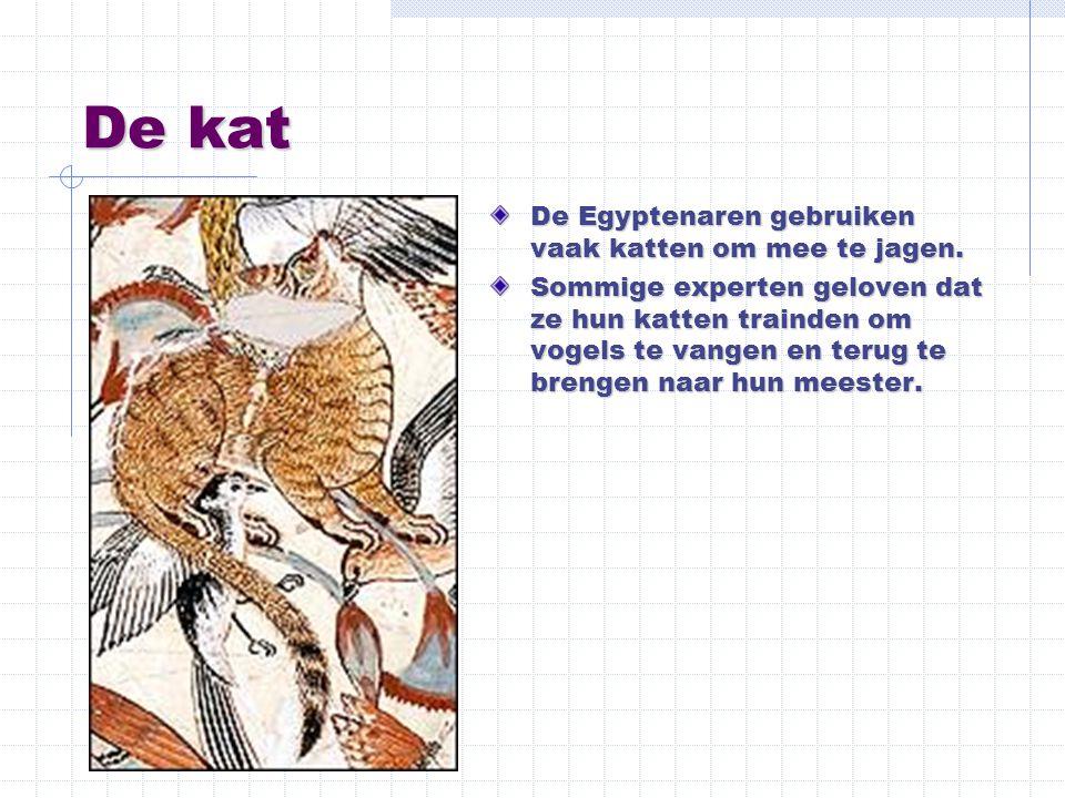 De kat De Egyptenaren gebruiken vaak katten om mee te jagen. Sommige experten geloven dat ze hun katten trainden om vogels te vangen en terug te breng