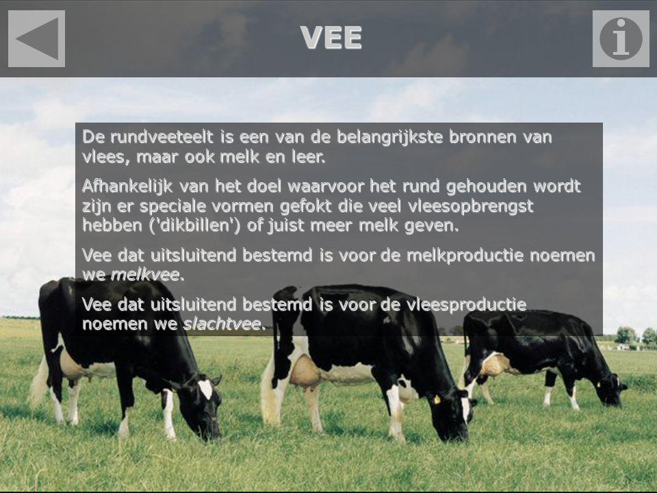 VEE De rundveeteelt is een van de belangrijkste bronnen van vlees, maar ook melk en leer. Afhankelijk van het doel waarvoor het rund gehouden wordt zi