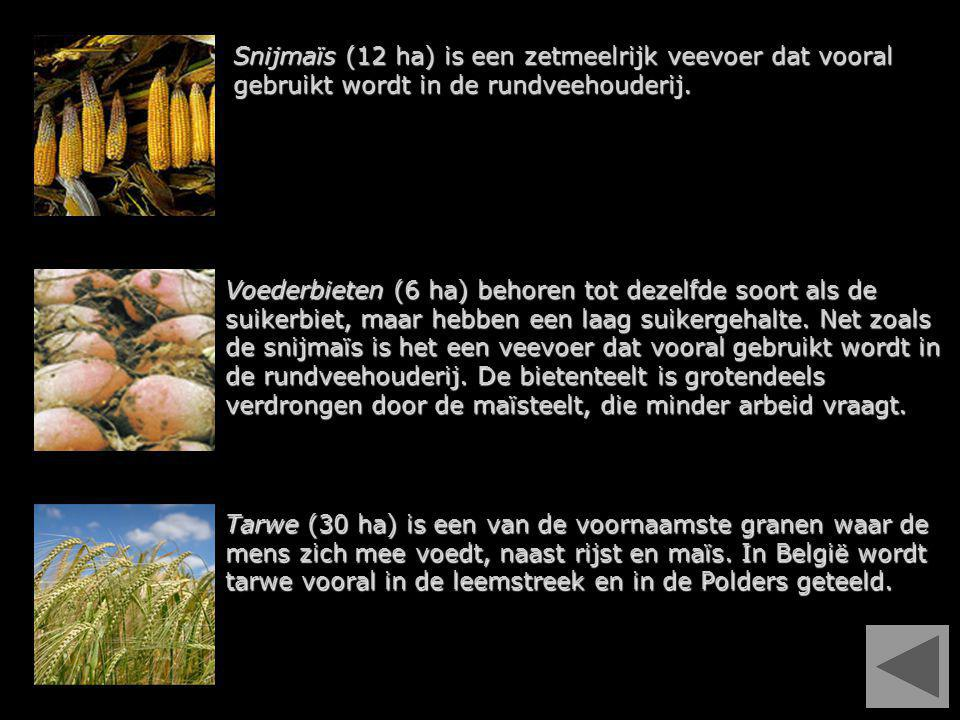 Snijmaïs (12 ha) is een zetmeelrijk veevoer dat vooral gebruikt wordt in de rundveehouderij. Voederbieten (6 ha) behoren tot dezelfde soort als de sui