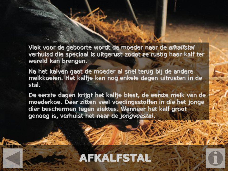 VOEROPSLAG De koeien krijgen twee soorten veevoer; ruwvoer en krachtvoer.