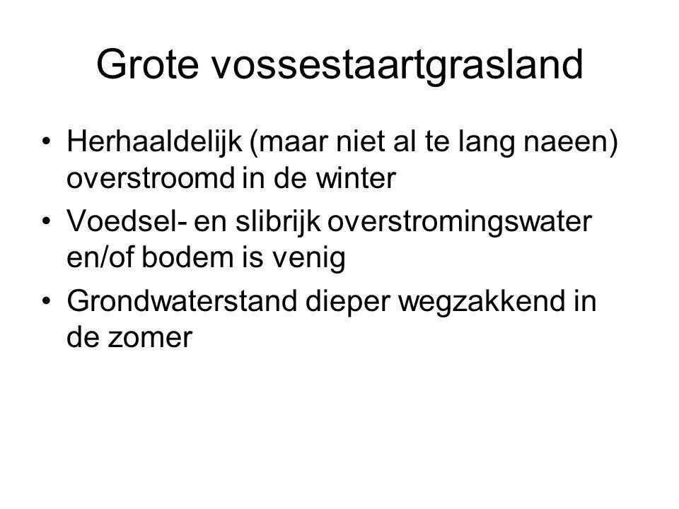 Glanshaverhooiland •Slechts uitzonderlijk overstroomd •Op goed 'wateropzuigende' bodem, daarom geen droogtestress voor de planten •Zware mineraalrijke bodem