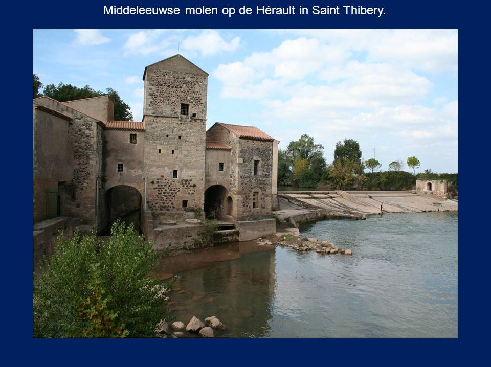 Saint-Martin-du-Loiret (Olivet).