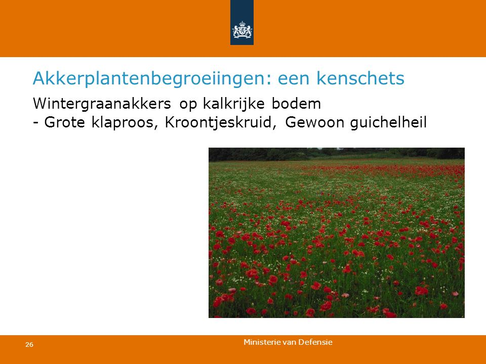 Ministerie van Defensie 26 Akkerplantenbegroeiingen: een kenschets Wintergraanakkers op kalkrijke bodem - Grote klaproos, Kroontjeskruid, Gewoon guich