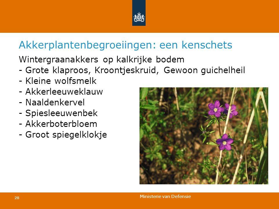 Ministerie van Defensie 28 Akkerplantenbegroeiingen: een kenschets Wintergraanakkers op kalkrijke bodem - Grote klaproos, Kroontjeskruid, Gewoon guich