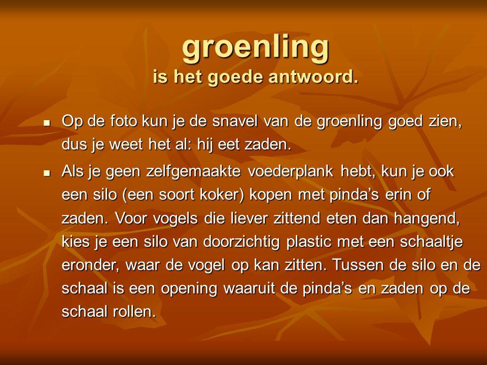  merel  koolmees  roodborst  koperwiek Is dit een Foto: Adri de Groot / www.vogeldagboek.nl