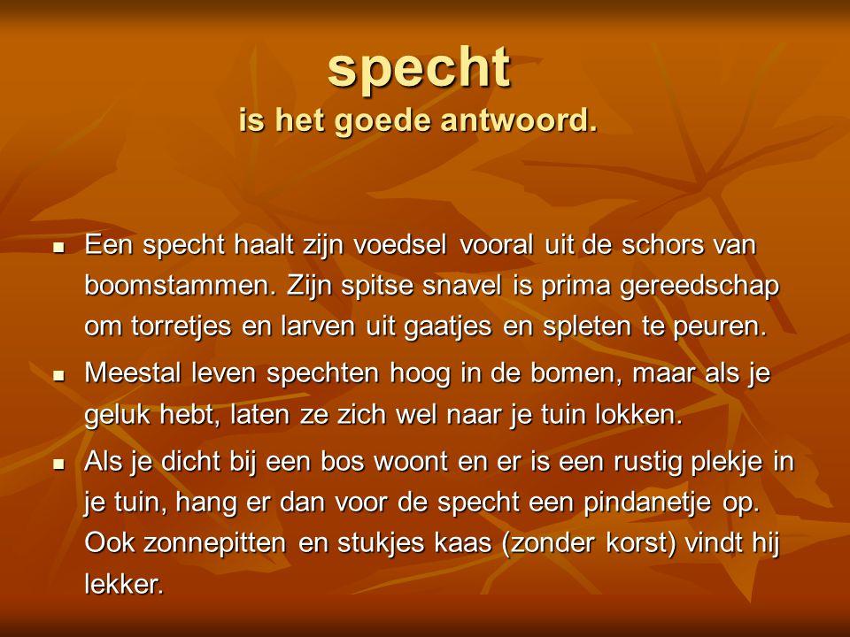  lijster  pimpelmees  koolmees  vlaamse gaai Is dit een Foto: Adri de Groot / www.vogeldagboek.nl