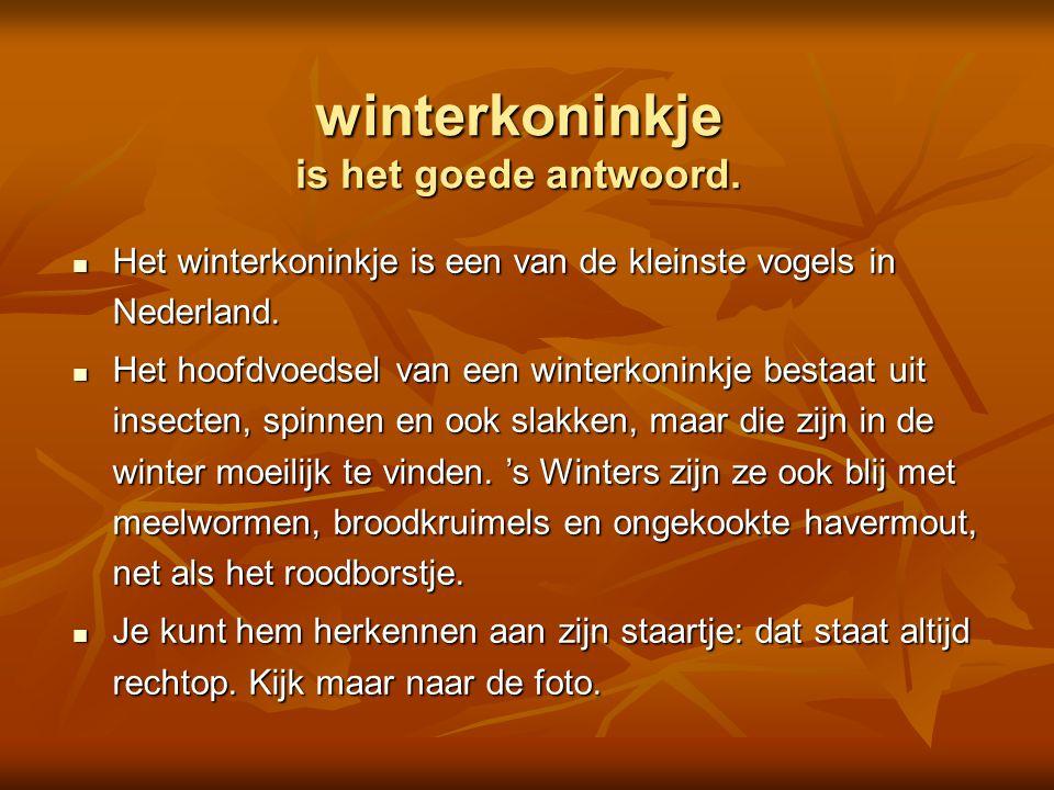  winterkoninkje  kramsvogel  koolmees  heggenmus Is dit een Foto: Adri de Groot / www.vogeldagboek.nl