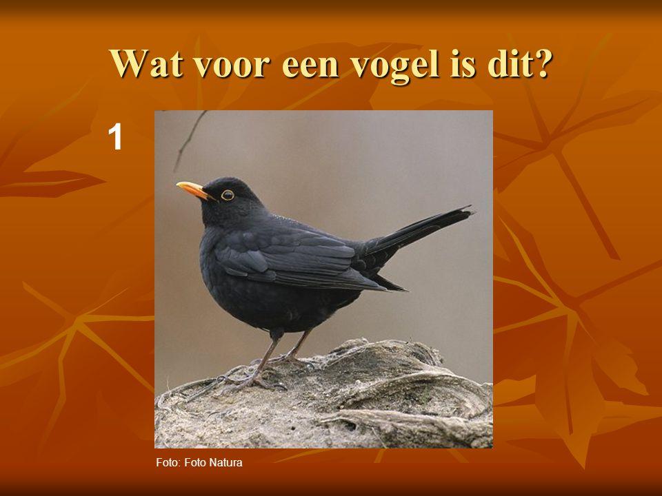 2 Wat voor een vogel is dit? Foto: Adri de Groot / www.vogeldagboek.nl