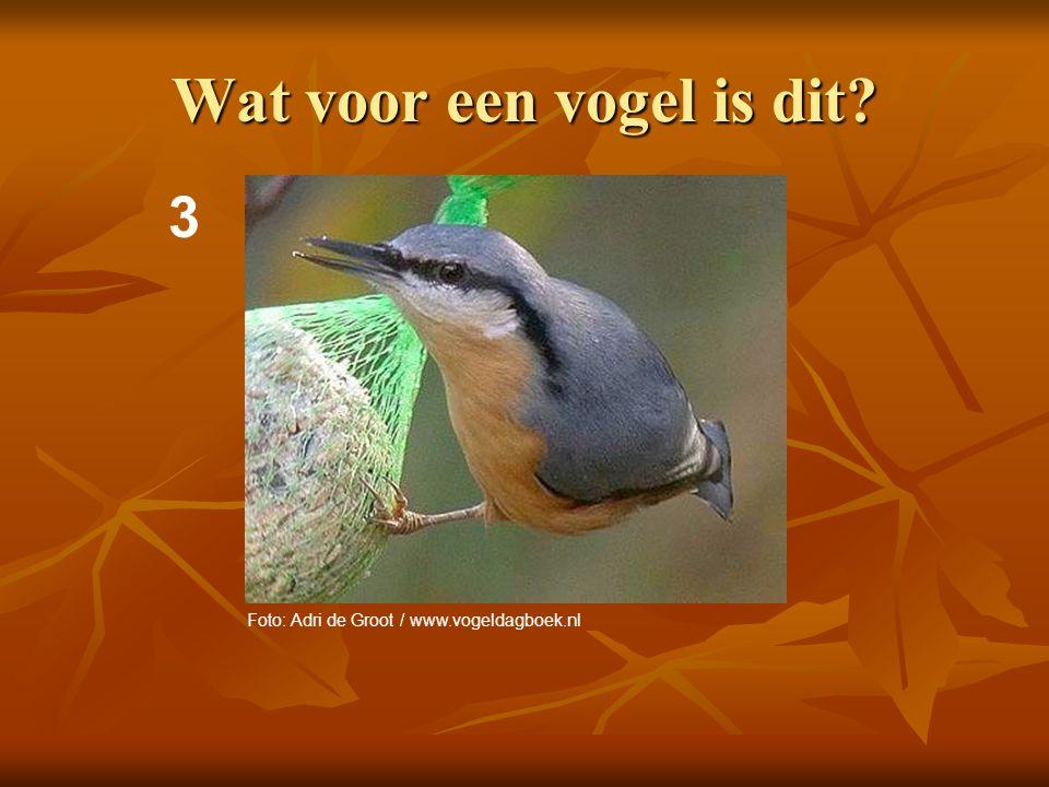 4 Wat voor een vogel is dit? Foto: Adri de Groot / www.vogeldagboek.nl