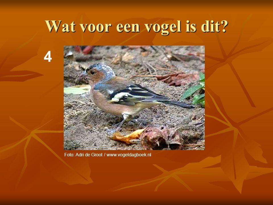 5 Wat voor een vogel is dit? Foto: Adri de Groot / www.vogeldagboek.nl