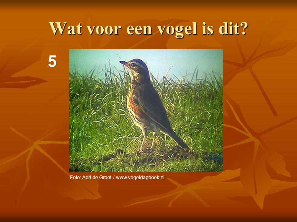 6 Wat voor een vogel is dit? Foto: Adri de Groot / www.vogeldagboek.nl