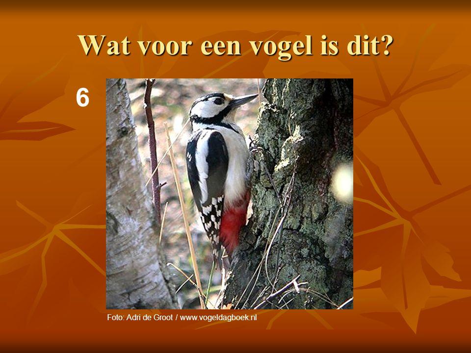 7 Wat voor een vogel is dit? Foto: Foto Natura