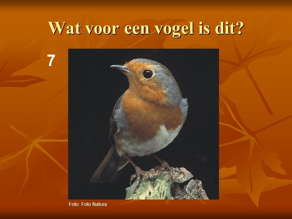 8 Wat voor een vogel is dit? Foto: Adri de Groot / www.vogeldagboek.nl