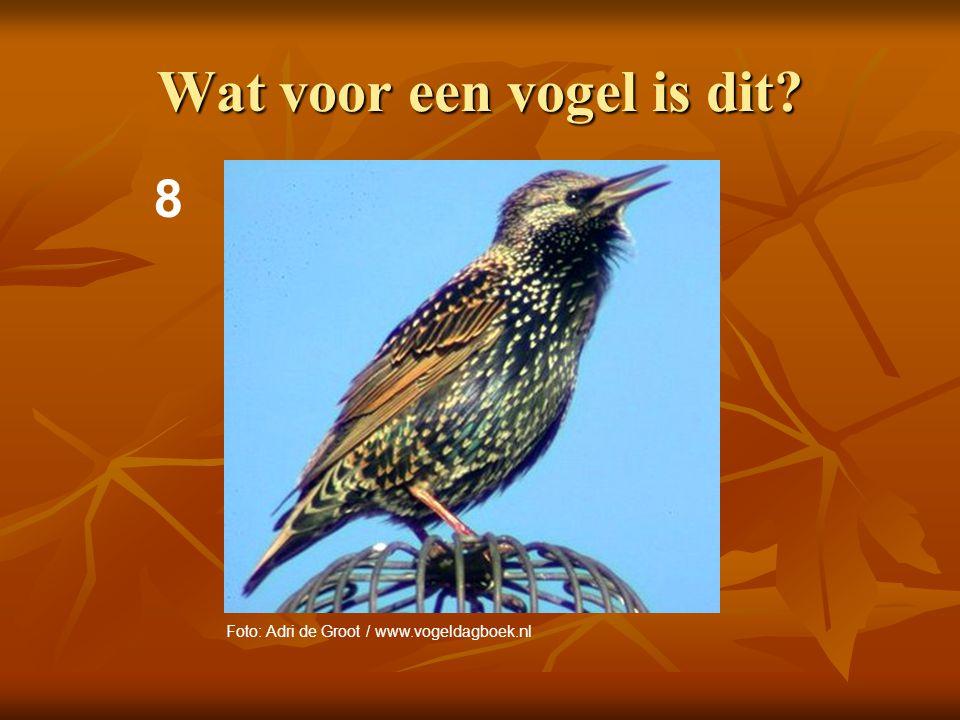 9 Wat voor vogels zijn dit? Foto's: Adri de Groot / www.vogeldagboek.nl