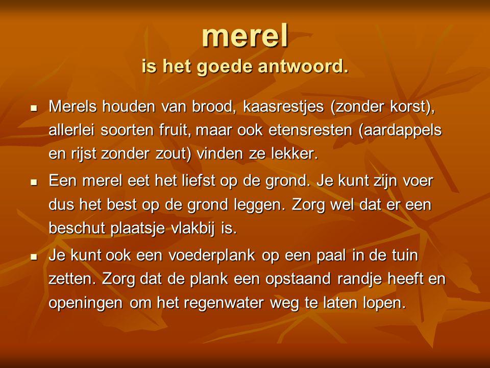  spreeuw  mus  pimpelmees  vink Is dit een Foto's: Adri de Groot / www.vogeldagboek.nl