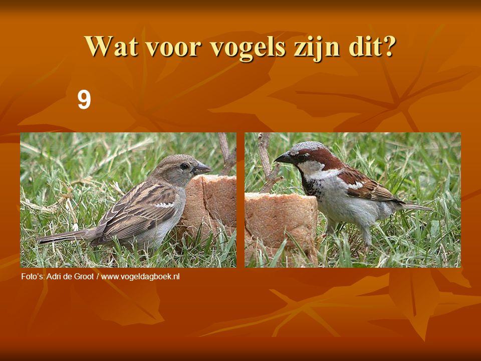 10 Wat voor een vogel is dit? Foto: Adri de Groot / www.vogeldagboek.nl