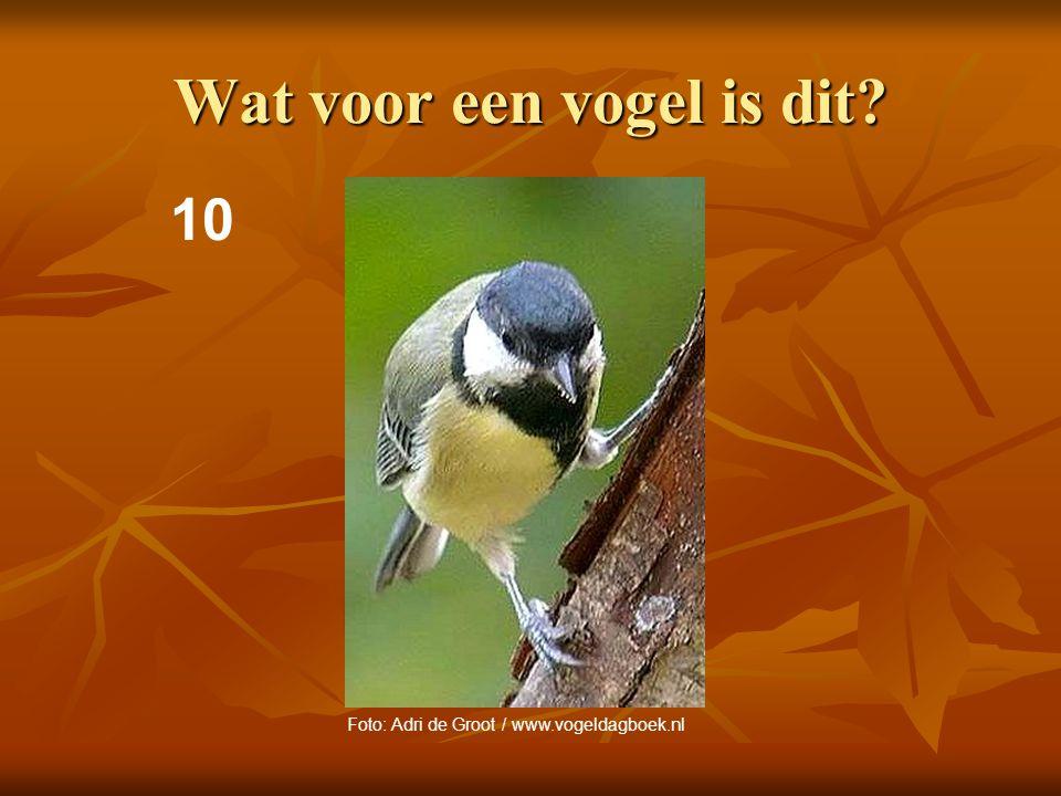 11 Wat voor een vogel is dit? Foto: Adri de Groot / www.vogeldagboek.nl