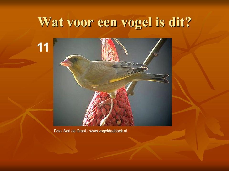 12 Wat voor een vogel is dit? Foto: Adri de Groot / www.vogeldagboek.nl