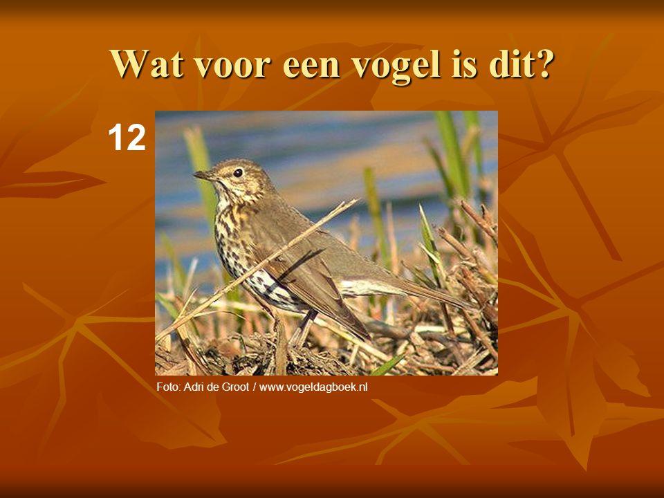 13 Wat voor een vogel is dit? Foto: Adri de Groot / www.vogeldagboek.nl