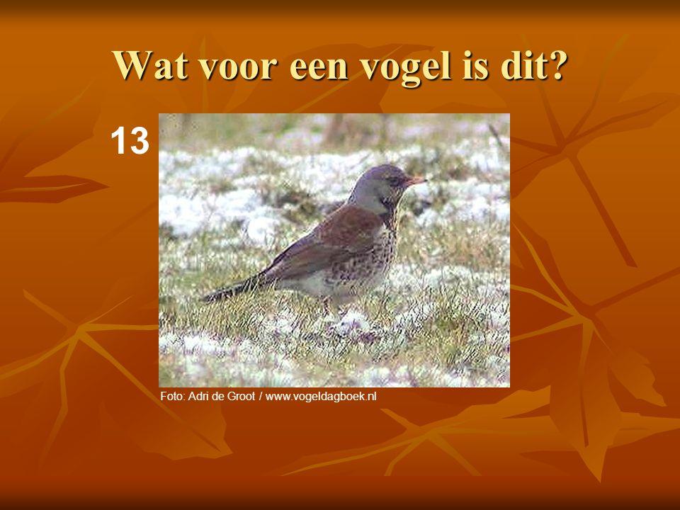 14 Wat voor een vogel is dit? Foto: Adri de Groot / www.vogeldagboek.nl