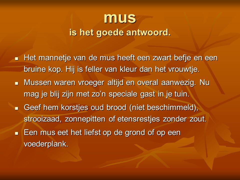  pimpelmees  specht  koolmees  mus Is dit een Foto: Adri de Groot / www.vogeldagboek.nl