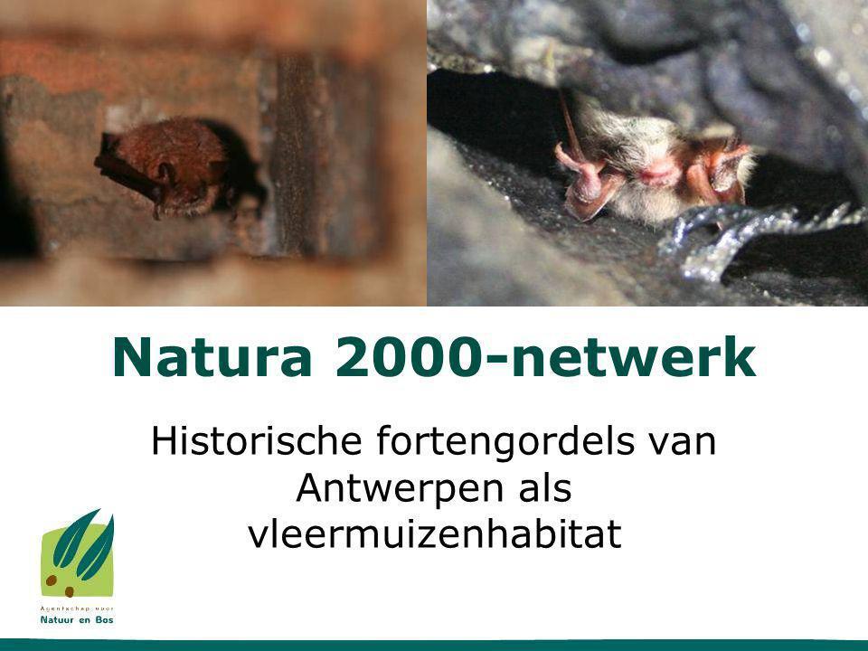 Natura 2000-netwerk Historische fortengordels van Antwerpen als vleermuizenhabitat