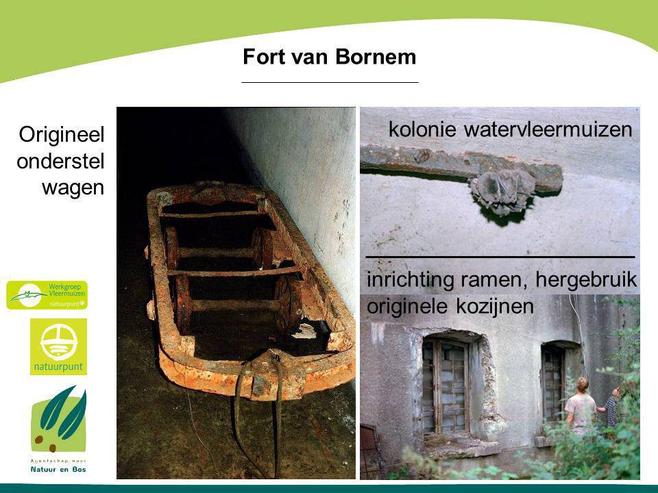 Origineel onderstel wagen kolonie watervleermuizen inrichting ramen, hergebruik originele kozijnen Fort van Bornem