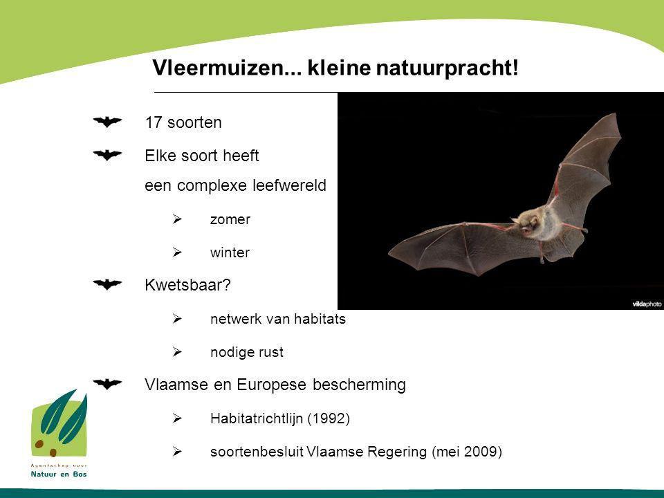 17 soorten Elke soort heeft een complexe leefwereld  zomer  winter Kwetsbaar.