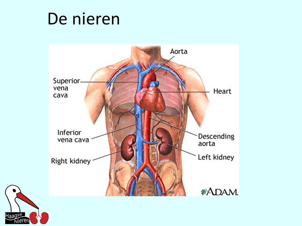 De nieren