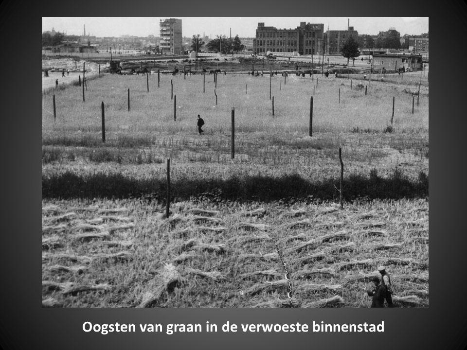 Rotterdamse graanelevators langs de rivier de Lek bij Lekkerkerk