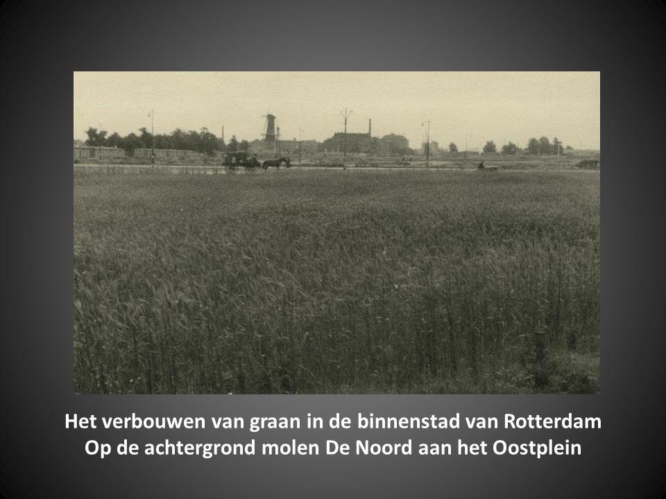Graanvelden langs de Botersloot