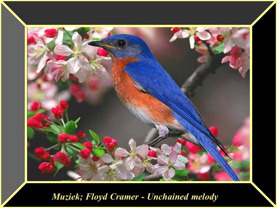 Muziek; Floyd Cramer - Unchained melody