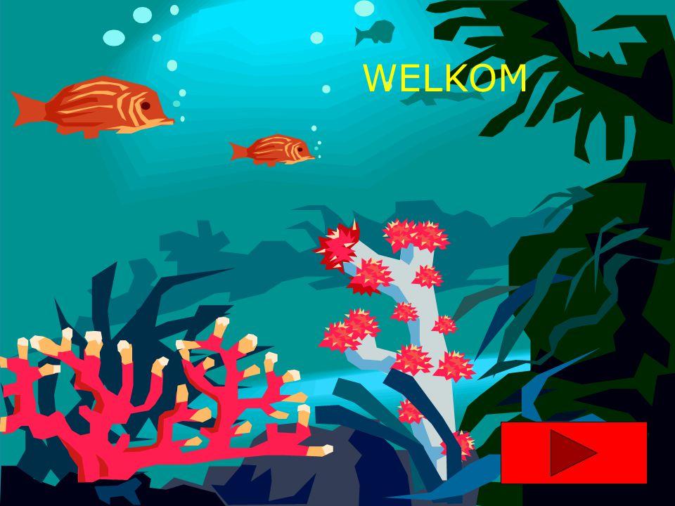 Marcus Pfister De mooiste vis van de zee Vertaald door Nannie Kuiper De vier winstreken