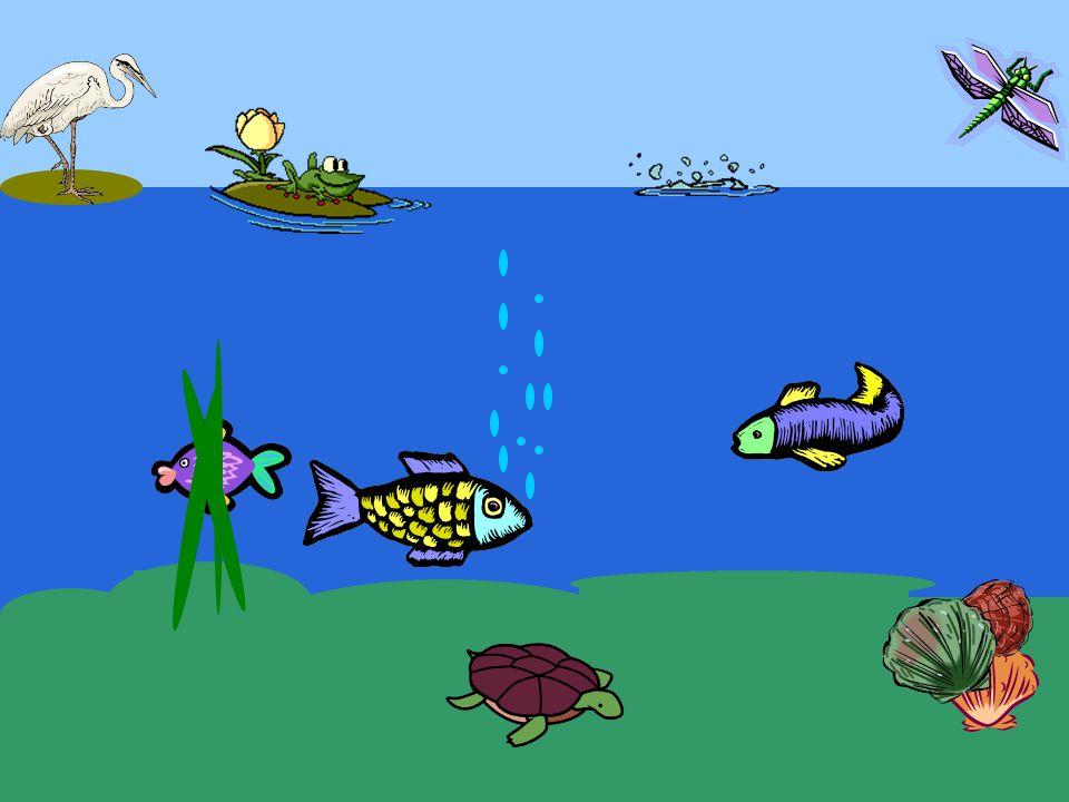 © Heidi Van Rentergem en © geert.kraeye@pandora.be De jonge vis flitste heen en weer door het water.
