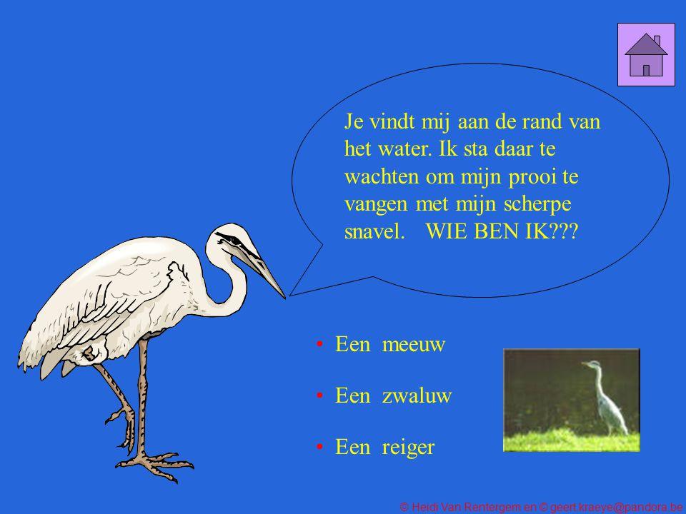 © Heidi Van Rentergem en © geert.kraeye@pandora.be DE JUISTE WEG Ons dikkopje zit in de penarie.