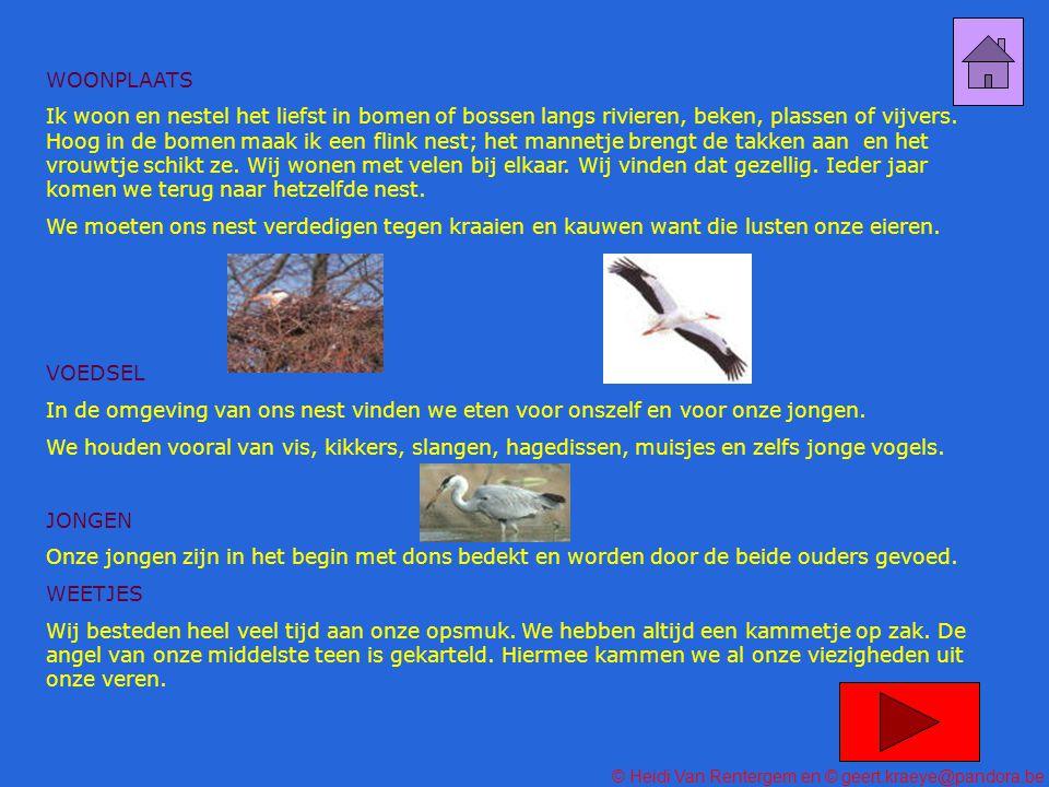 © Heidi Van Rentergem en © geert.kraeye@pandora.be Wij behoren tot de familie van de amfibieën.