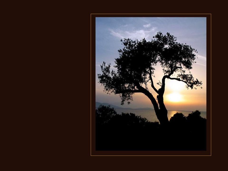 Den hemelse macht smeet mijn happ'in de grond en 't boomtje bleef staan daar waar dat 't stond