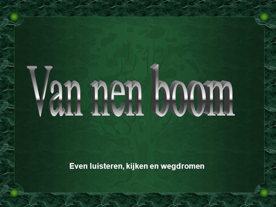 Willem Vermandere niet scrollen