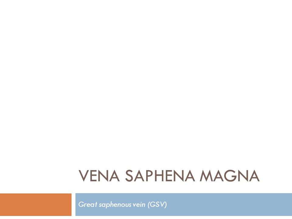 VENA SAPHENA MAGNA Great saphenous vein (GSV)