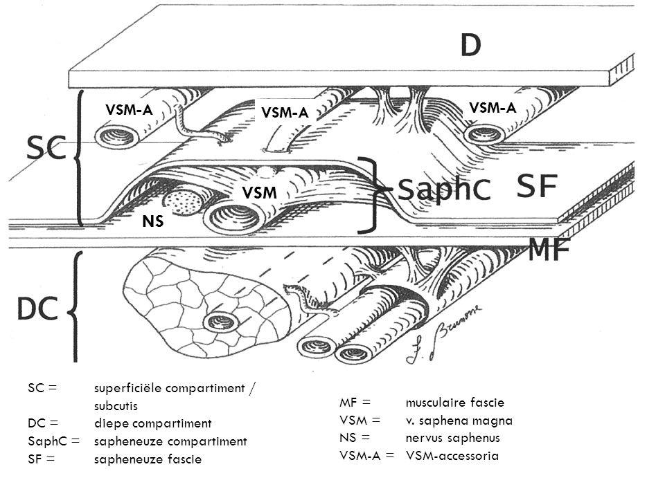SC = superficiële compartiment / subcutis DC = diepe compartiment SaphC = sapheneuze compartiment SF = sapheneuze fascie MF = musculaire fascie VSM =