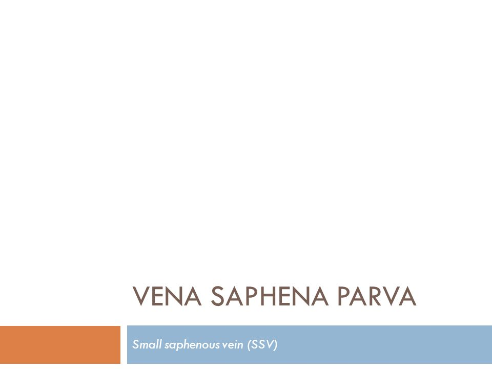 VENA SAPHENA PARVA Small saphenous vein (SSV)