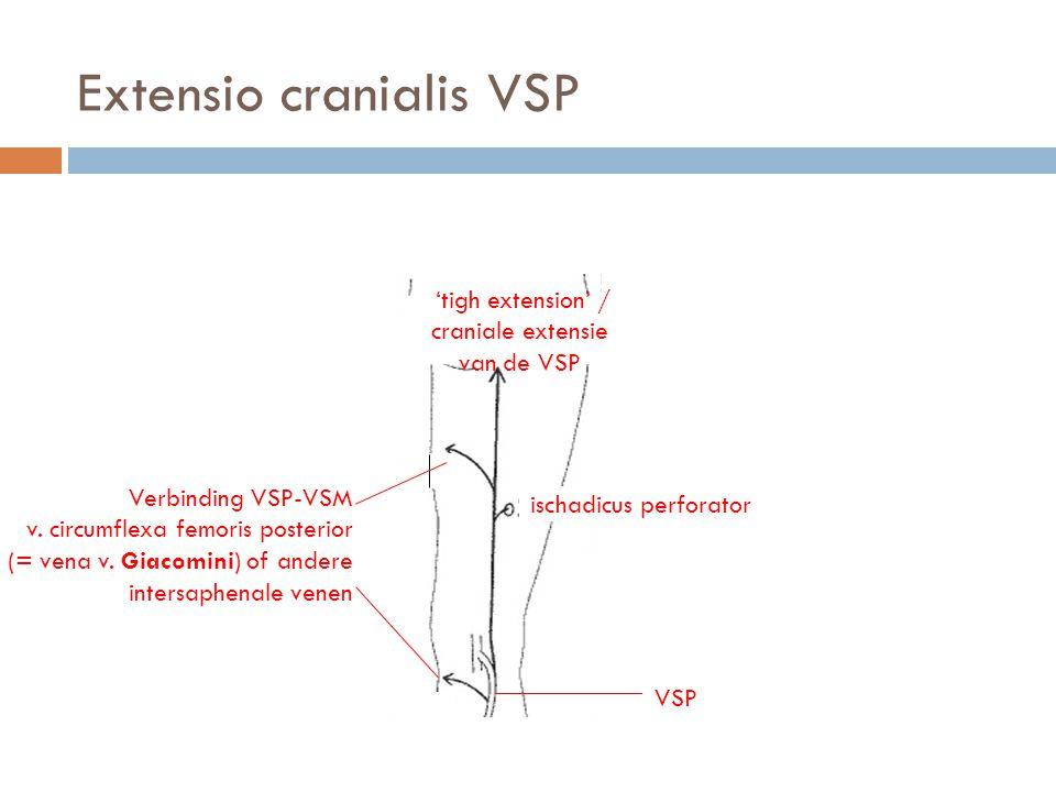 Extensio cranialis VSP VSP 'tigh extension' / craniale extensie van de VSP ischadicus perforator Verbinding VSP-VSM v. circumflexa femoris posterior (