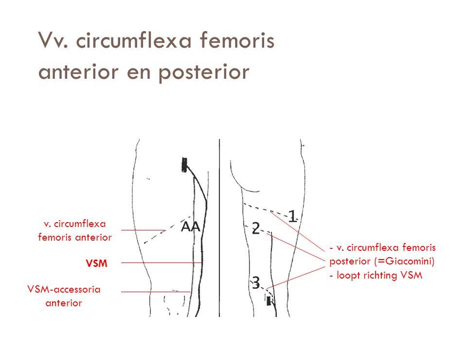 Vv. circumflexa femoris anterior en posterior VSM v. circumflexa femoris anterior VSM-accessoria anterior - v. circumflexa femoris posterior (=Giacomi